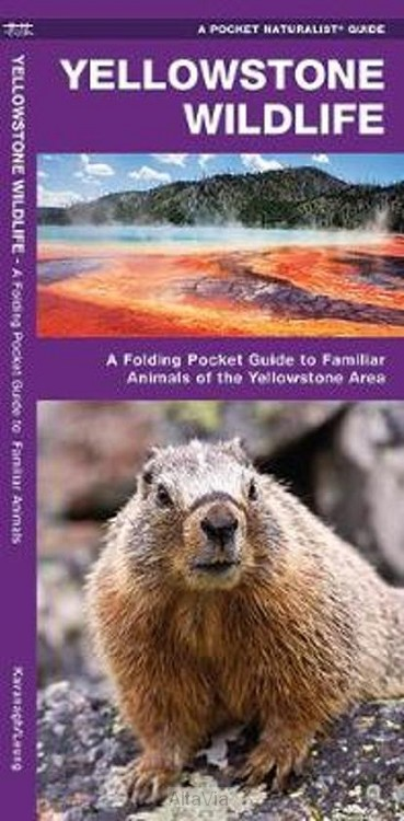 Yellowstone Wildlife PLOOIBAAR POCKETMAP